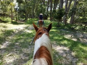 TJ mein Pferd + Guide