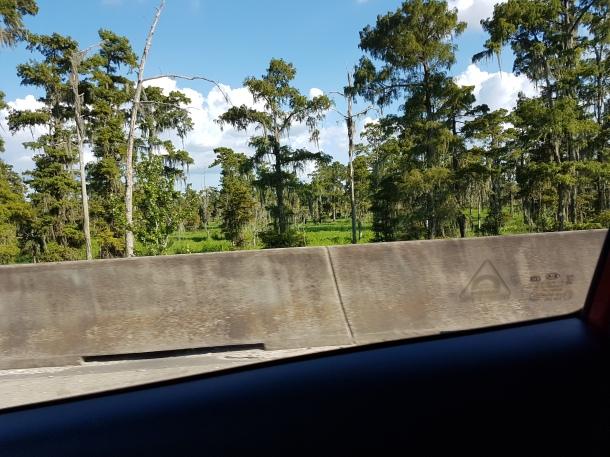 Fahrt Impression III (Brücke über Sumpfgebiete)