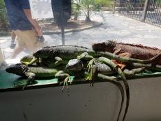 Gruppenkuscheln der Reptilien
