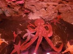 Mein Freund der Oktopus